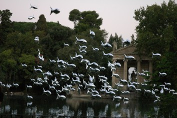 Banc de sardines, Rome